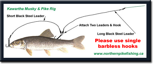 How to catch northern pike fishing tips techniques for How to make a fish trap for big fish